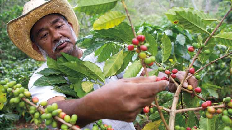 Improving the lives of coffee farmers