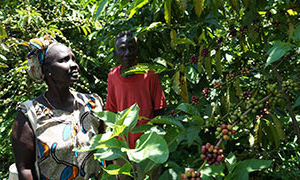 Coffee farmers in Ethiopia