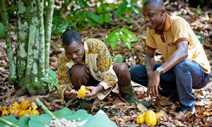 Sourcing high quality cocoa in Cote d'Ivoire