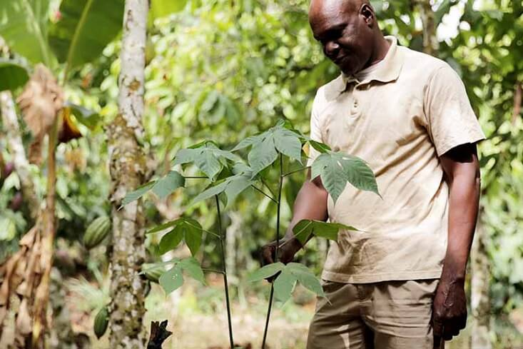 Cocoa Forests Initiative